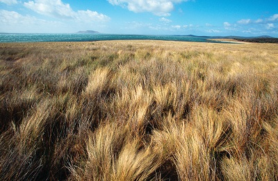 Grassy plain on Cape Barren Island also known as truwana.